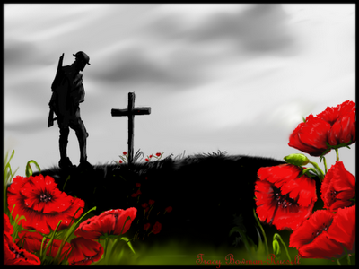 Poppies - Flanders Field