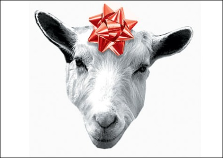 Goat for Christmas