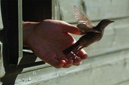 setting the bird free